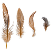 Domestic Goose Feathers