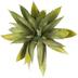 Succulent Aloe Pick