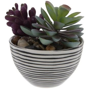 Succulent In Striped Pot