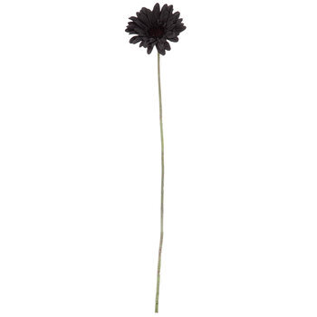 Black Gerbera Daisy Stem