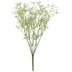 White New Love Gypsophila Bush
