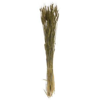 Moss Green Bearded Tarwe Bundle