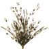Cream Wildflower Bush