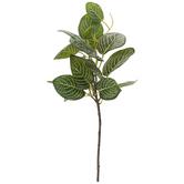 Fittonia Branch