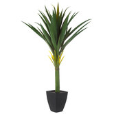 Agave Sisal Potted Plant