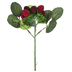 Red Bayberry Pick