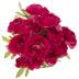 Dark Pink Ranunculus Bush
