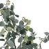 Eucalyptus Tree In Black Pot