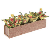 Miniature Caladiums Planter