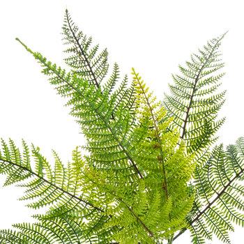 Leather-Leaf Fern Bush