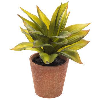 Succulent In Brown Pot