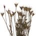 Dried Nigella Orientatlis Bundle