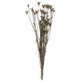 Dried Nigella Orientatlis Bundle