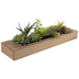 Mixed Succulents In Wood Planter