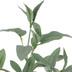 Mini Sage Bush