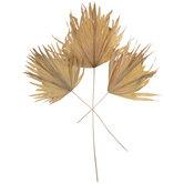 Dried Palm Leaf Fans