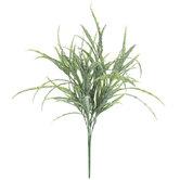 Frosted Green Birdnest Grass Bush