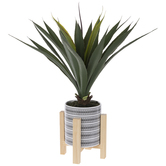 Agave Bush In Pot With Stand