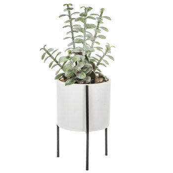 Donkey Tail Plant In White Pot