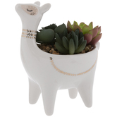 Succulents In Llama Pot