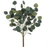 Eucalyptus Bush