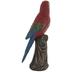 Parrot On Tree Stump