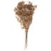 Natural Gypsy Grass Bundle