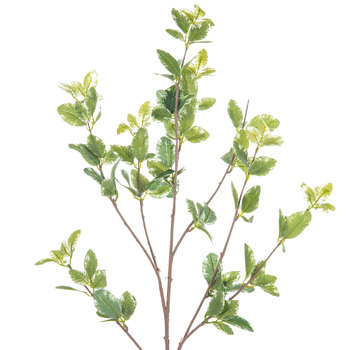 Green Euonymus Mini Leaves Branch
