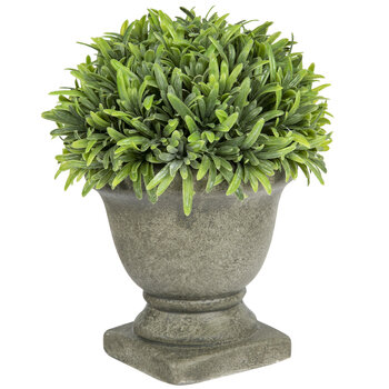 Green Rosemary In Urn