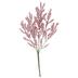 Light Pink Astilbe Bush