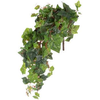Green English Ivy Bush
