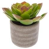 Succulent In Gray Cement Pot