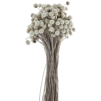 Dried White Button Flower Bundle
