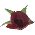 Burgundy Rose Pick