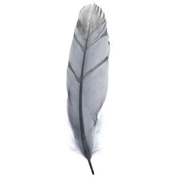"""Gray & Silver Fancy Goose Feathers - 7"""" - 8"""""""